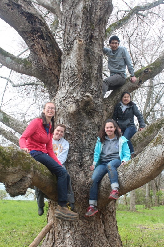 Volunteer group photo in a tree