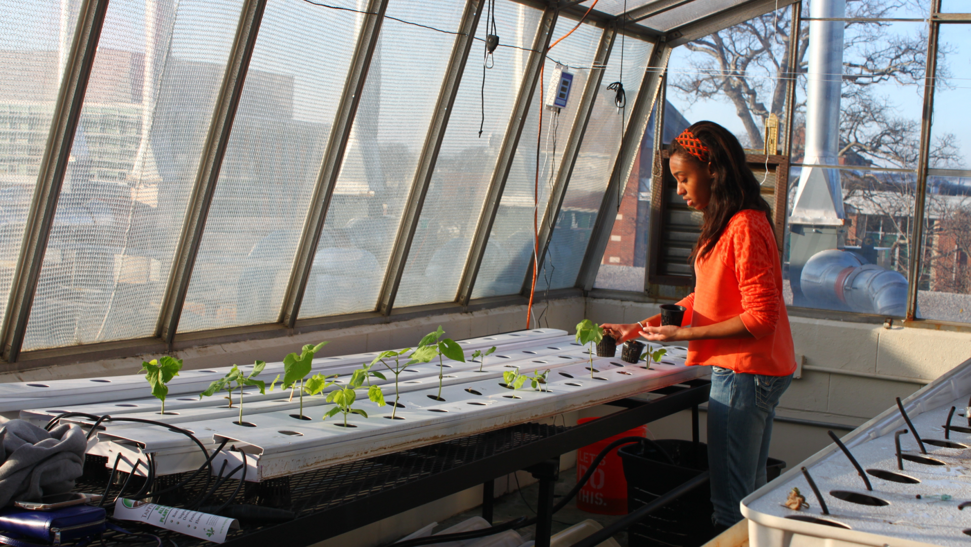 Student tending to plants in a greenhouse